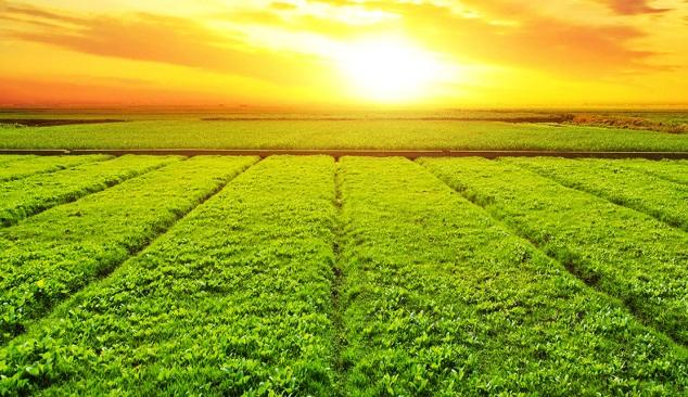 Produtos agrícolas mais apoiados